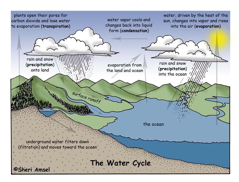 Water Cycle Diagram Explanation Diy Enthusiasts Wiring Diagrams