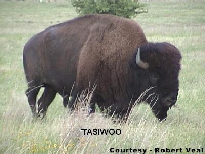 saladogt / Kiowa Kiowa Food